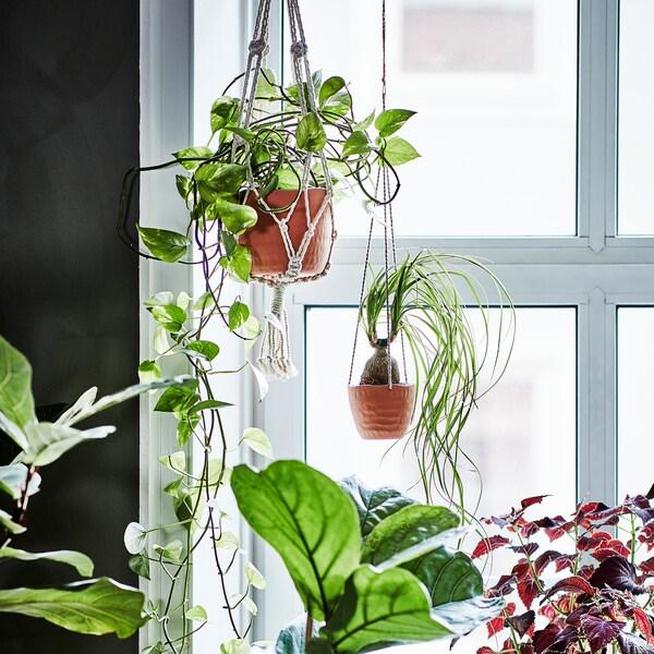 明るい窓際に4つのグリーンプラント。1つはベージュの綿製植木鉢つり下げ用ホルダー、ほかは粘土のセラミックに入っています。