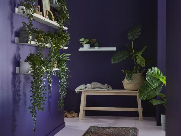 Sala com paredes em roxo, com bancos de madeira e prateleiras em branco com plantas artificiais FEJKA em vasos.