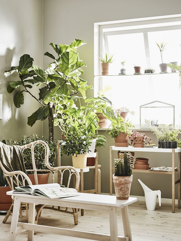 Sala com uma janela grande e plantas de vários tamanhos e variedades