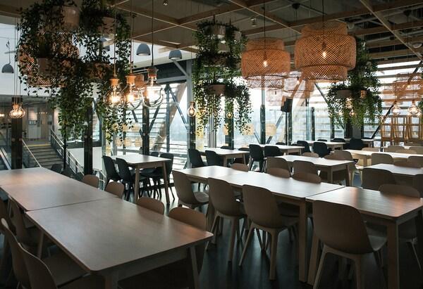 Sala con mesas y sillas, plantas colgantes y lámparas de ratán.