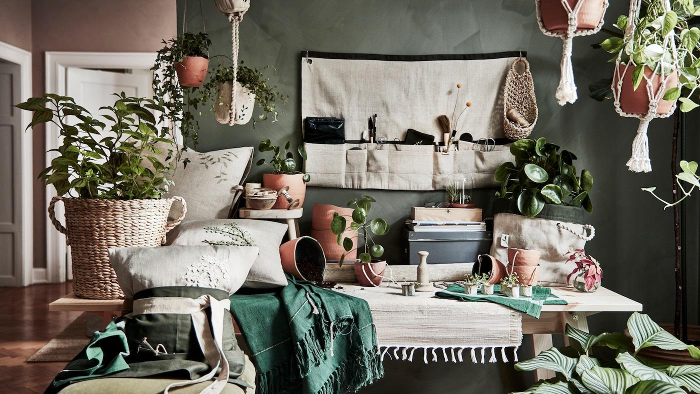 Sala con muchas plantas en sus maceteros, hechos de fibras naturales, madera y más materiale sostenibles. Hay telas y cojines que combinan con la pared verde.