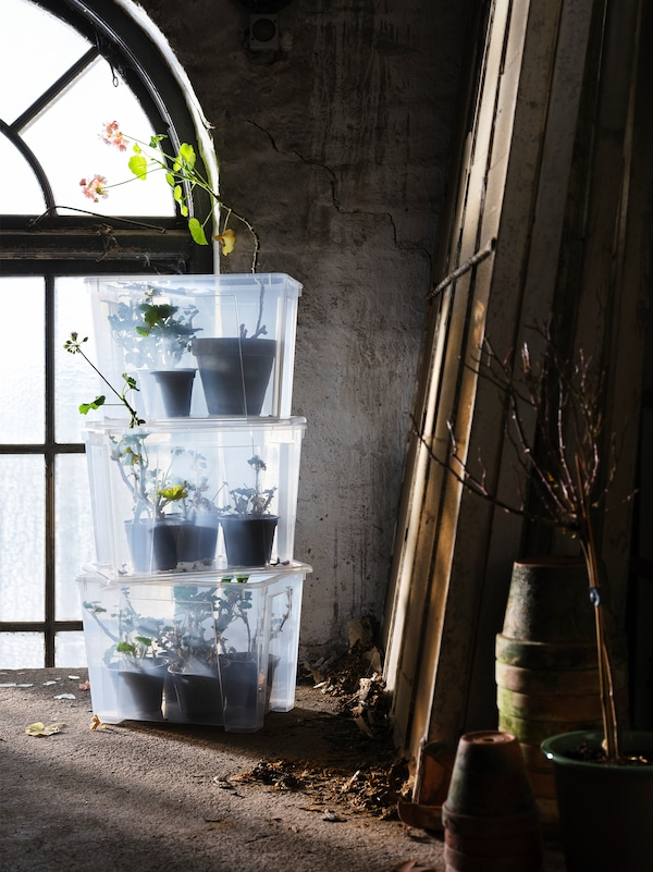 SAMLA storage boxes sit against a garden wall with plants inside.