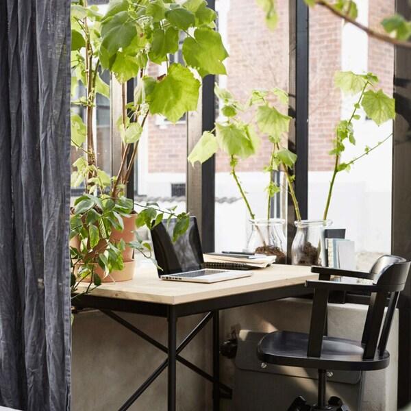 Secretária de estilo industrial encostada a uma janela ampla. Em cima da secretária está um computador portátil e alguns objetos de trabalho. À volta, muitas plantas.
