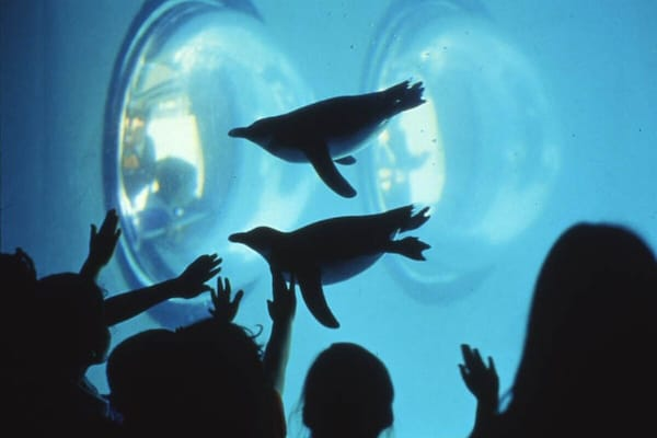 shadow images of children looking at two penguins in an aquarium
