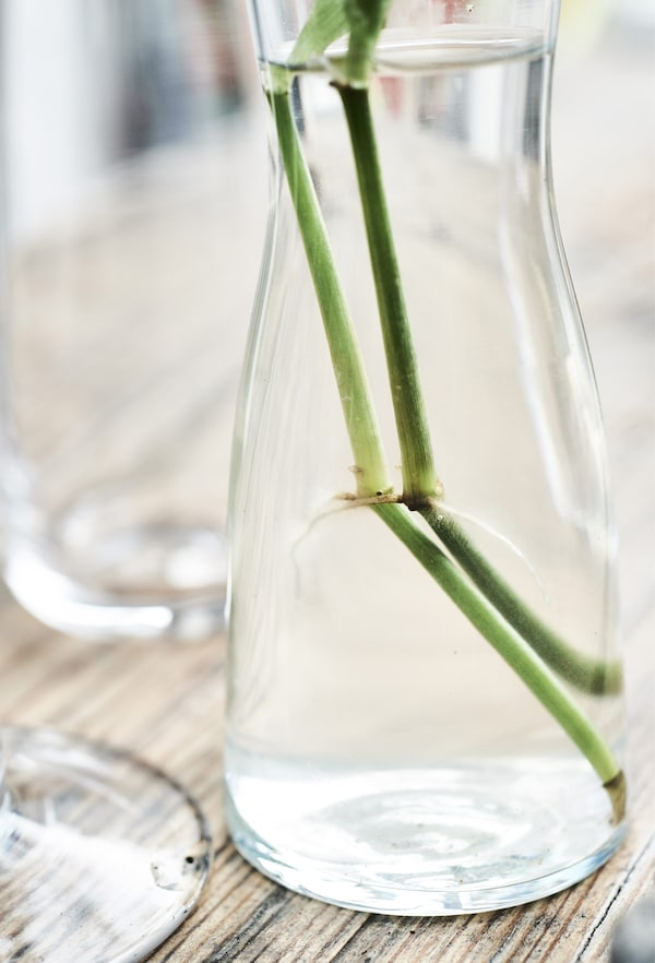 Shoots growing from a stem in a glass of water.