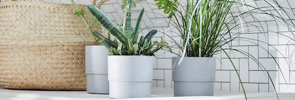 Shop our wide range of plants and plant pots at IKEA Home Furnishings.