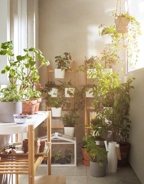 Sijoita kasveja eri korkeuksille. IKEA SATSUMAS kukkapöytä ja kukkatikkaat mahdollistavat sen, että voit asettaa ruukut eri korkeuksilla oleville hyllyille, mikä tuo huoneeseen dynaamista ilmettä. Voit myös käyttää kukkajalkaa sivupöytänä ja laskea sille kahvikupin tai kirjan.
