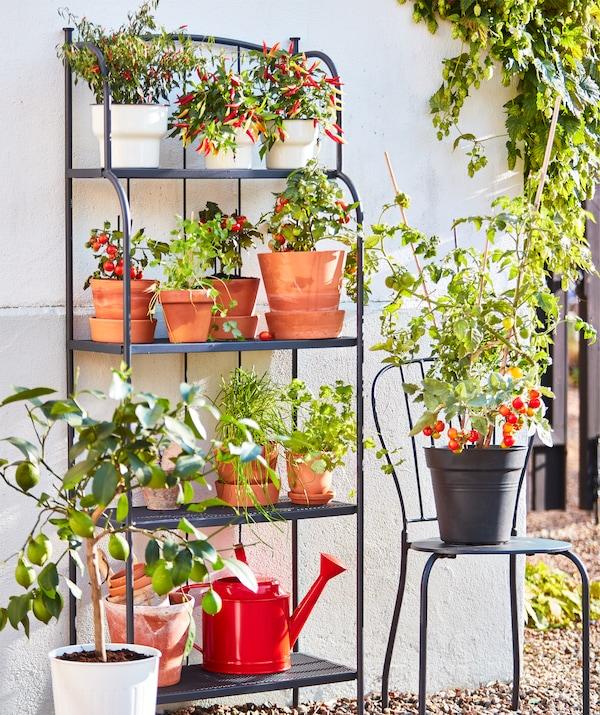 Sive LÄCKÖ čelične spojene police s četiri police i siva LÄCKÖ čelična stolica s vazama u kojima su jestive biljke, na otvorenom prostoru.