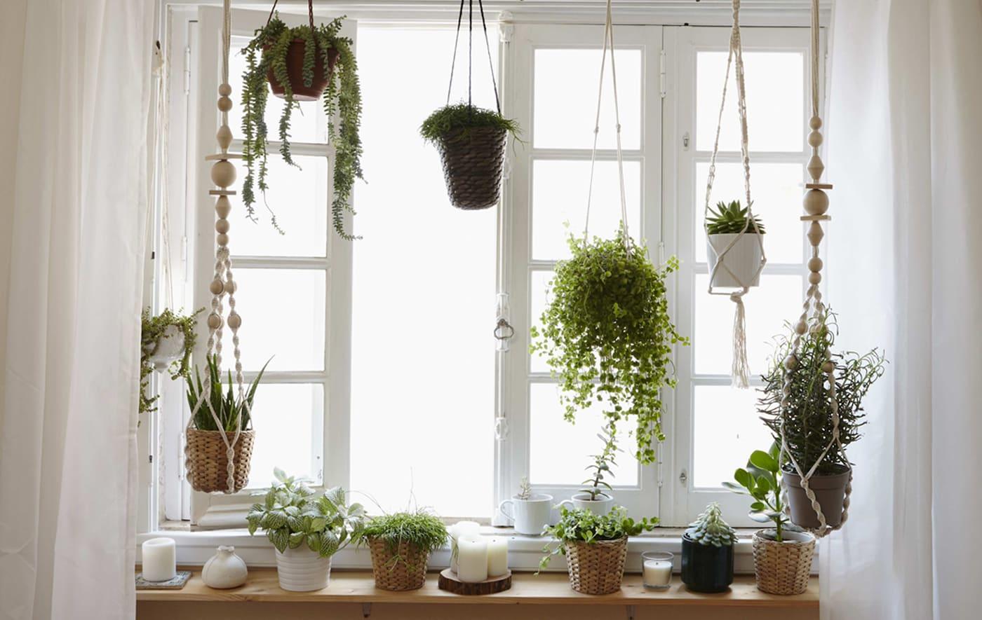 Skab en lille have i vinduet derhjemme.