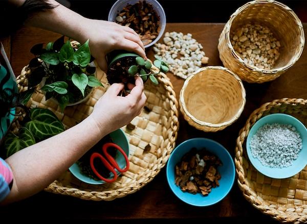 سلات منسوجة على طاولة مع أواني من خامات الزراعة ويدان تحملان إناء عناية بالنباتات.