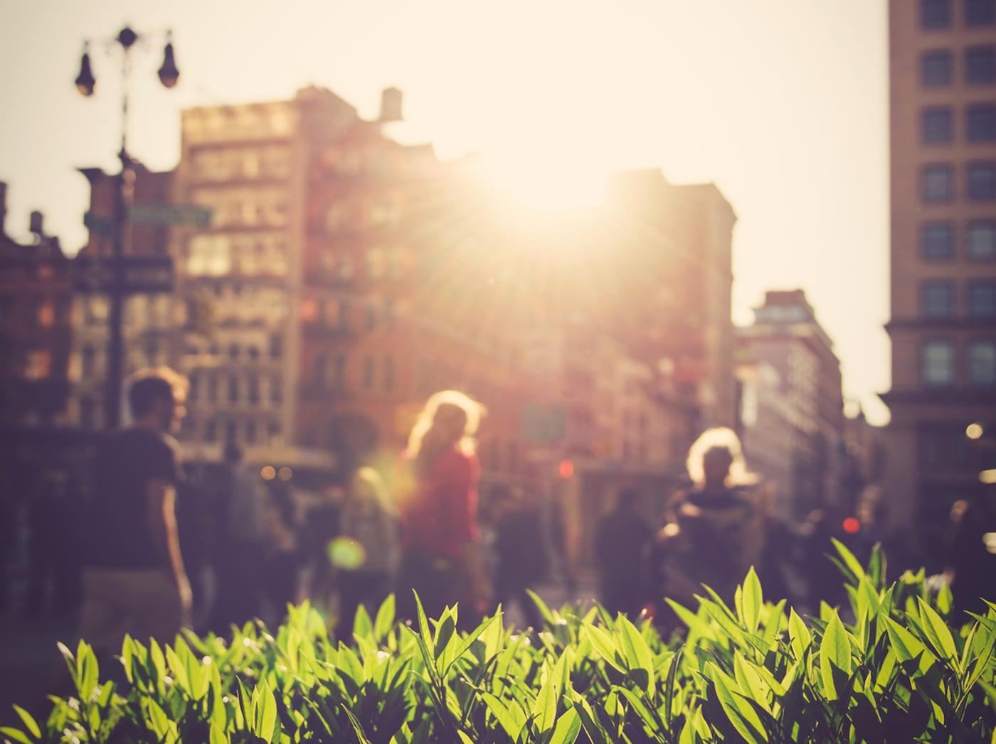 Sluneční světlo prosvítá několika budovami na jasně zelené rostliny. V pozadí chodí lidé.