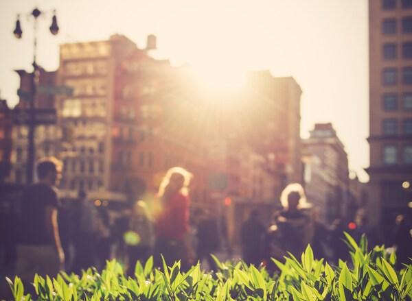 Sluneční světlo prosvítá několika budovami na jasně zelené rostlin. V pozadí chodí lidé.