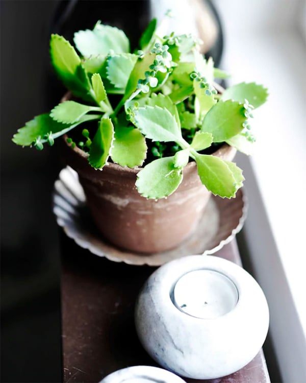 Small plant and tealight candle sitting on windowledge