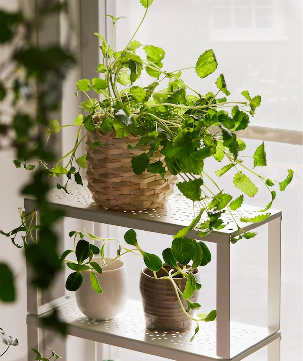 Small, slimline VARIERA shelf standing on a sunlit window sill and filled with several small flower pots with leafy plants.