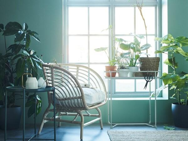 Soba prepuna zelenila sa stolicom od ratana, KRYDDPEPPAR stalkom za biljke i prozorom kroz koji dopire sjajna svjetlost.