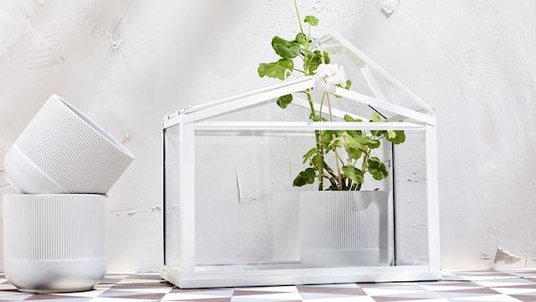 SOCKER Üvegház IKEA Ideális körülményt biztosít a növénynek a csírázáshoz és a növekedéshez.