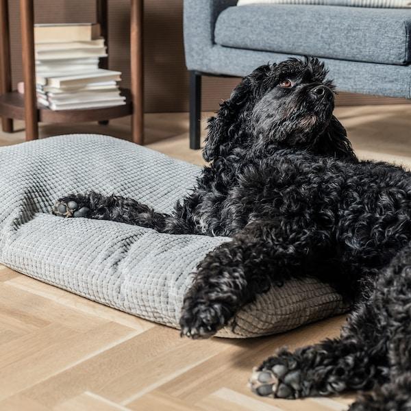 Soggiorno con un cane sdraiato in parte sul pavimento e in parte su un cuscino per animali; sullo sfondo un tavolino con una pila di libri e una poltrona - IKEA
