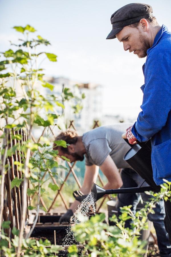 Stadtgärtner Will sät Pflanzen in ASKHOLMEN Blumenkasten aus.