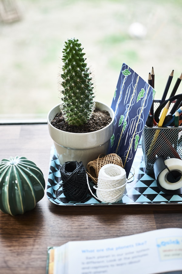 Stationary and a cactus in a pot on a small tray.