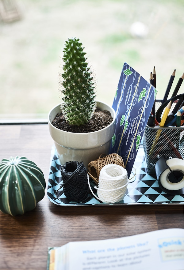 Stationery and a cactus in a pot on a small tray.