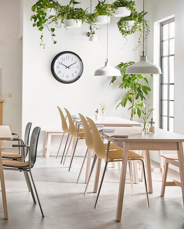 Stołówka z białymi ścianami i białą podłogą, ustawionymi w grupkach stołami i krzesłami w kolorze jasnego drewna, zegarem ściennym i mnóstwem zielonych roślin.