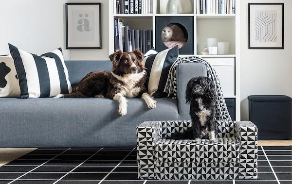 Stue med en hund i en sofa og en anden hund i en sofa til kæledyr foran; en kat kigger ud ad et kattehus i en reol.