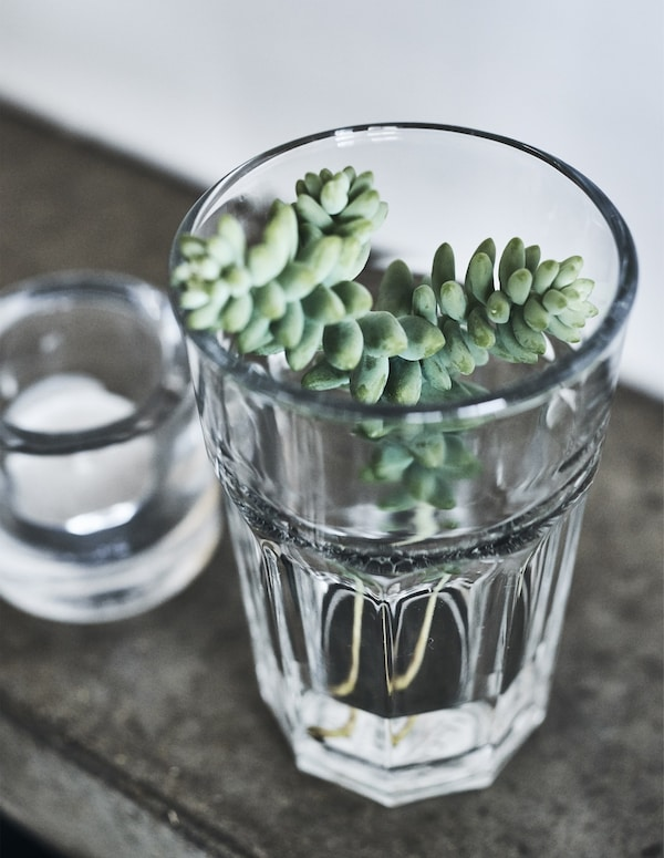 Succulent cuttings in a glass.