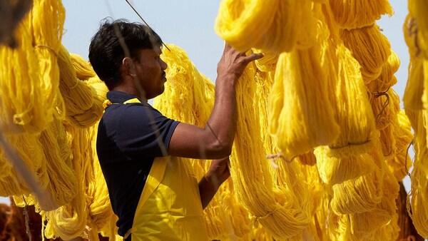 Svazky žluté vlněné příze, které byly právě obarveny a jsou kontrolovány mužským pracovníkem.