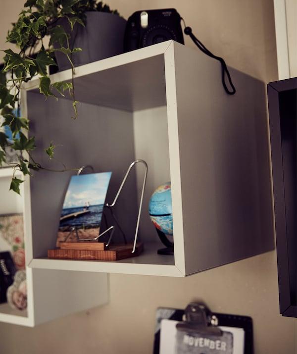 صور ونباتات معروضة في وحدة تخزين مكعبة مفتوحة.