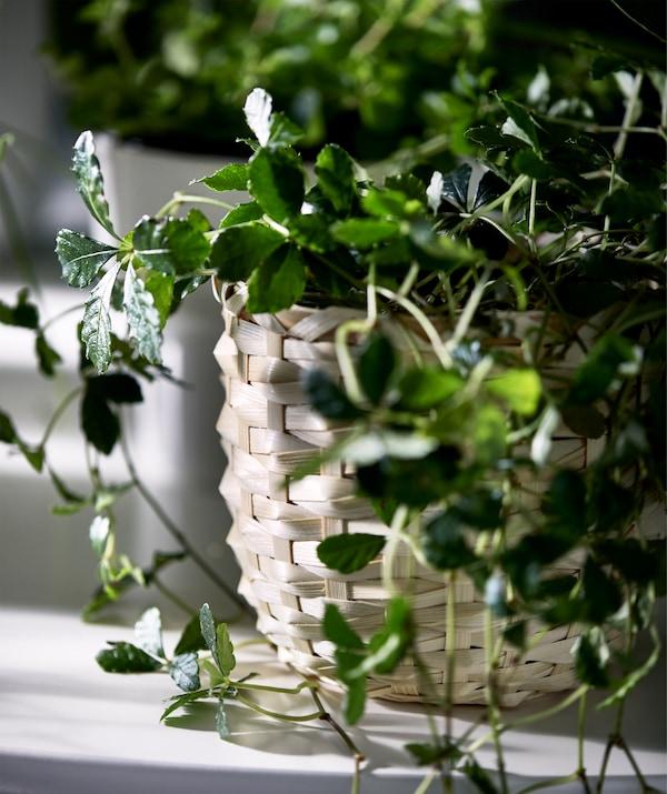صورة مفصلة لإناء نباتات وسطحه الخارجي من ألياف الخيزران المنسوجة، يحمل نبات بأوراق صغيرة.