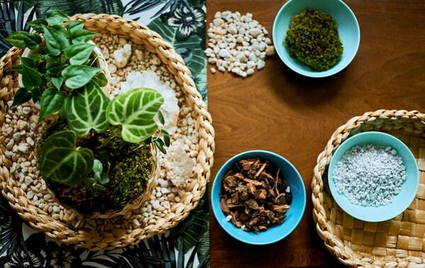 Table sur laquelle sont disposés une bande de tissu à motif botanique, des plantes miniatures sur un plateau et des bols contenant du matériel d'empotage.