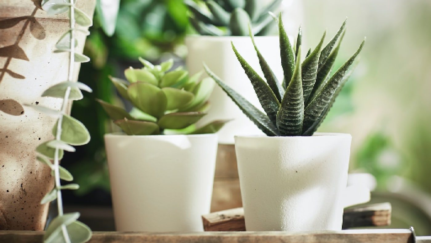 Take your home to the next level with our wide range of artificial plants & flowers. They never wilt, look fresh year after year, and help boost your mood and happiness.