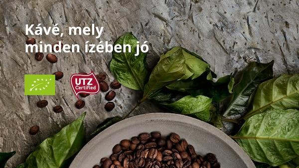 Tál kávébabbal, kávélevelek körül, a képen