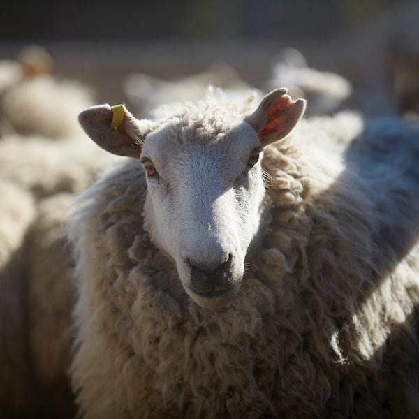 Teppiche aus nachhaltiger Wolle