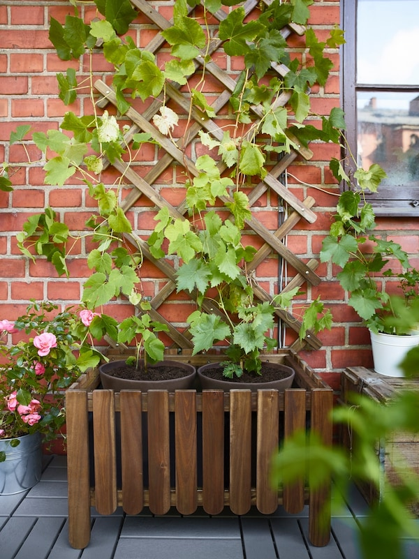 The ASKHOLMEN trellis and flower box against an outdoor brick wall with greenery growing up it.