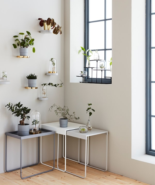 The corner of a room, with small tables and wall shelves displaying a collection of plants, cuttings and glass domes.