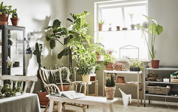 The corner of a white living room with lots of indoor pot plants on plant stands.
