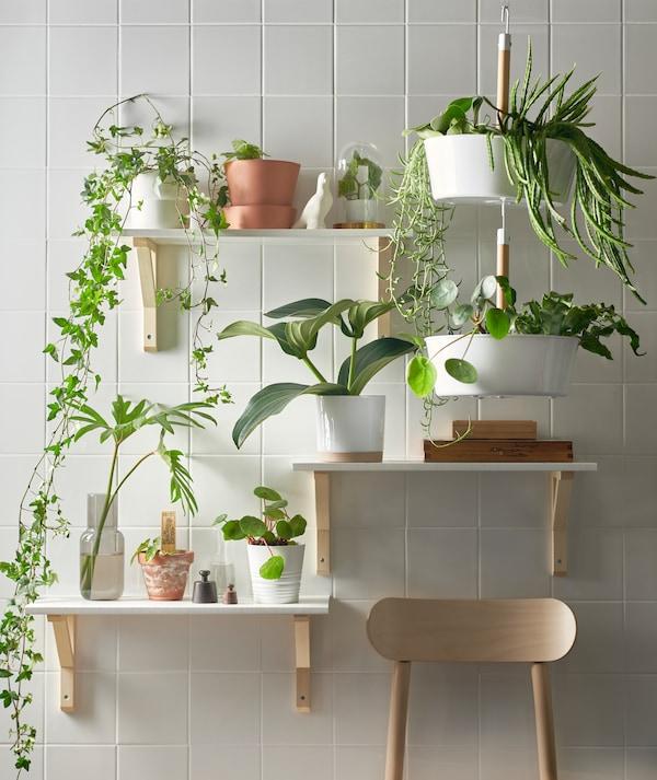 ثلاثة رفوف على ارتفاعات مختلفة ووعاء نباتات يعلق BITTERGURKA أبيض مملوء بالنباتات الخضراء على حائط بلاطات أبيض.