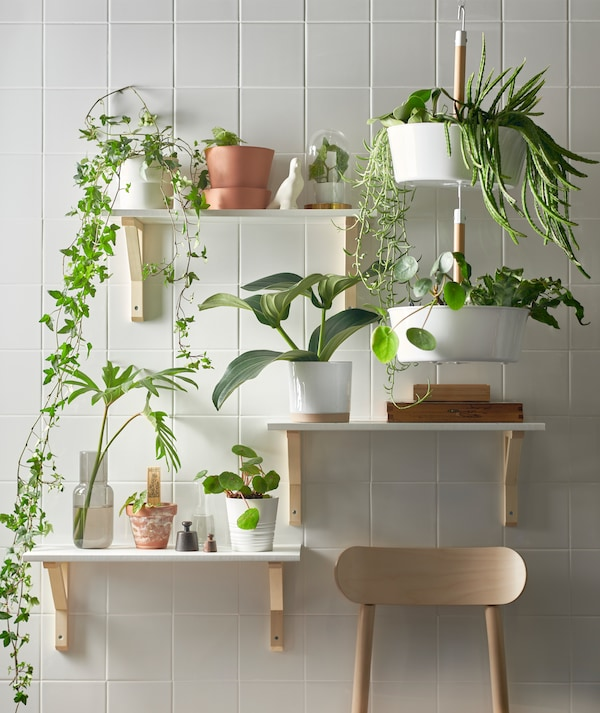 Three shelves at different heights and a white BITTERGURKA hanging planter filled with green plants on a white tile wall.