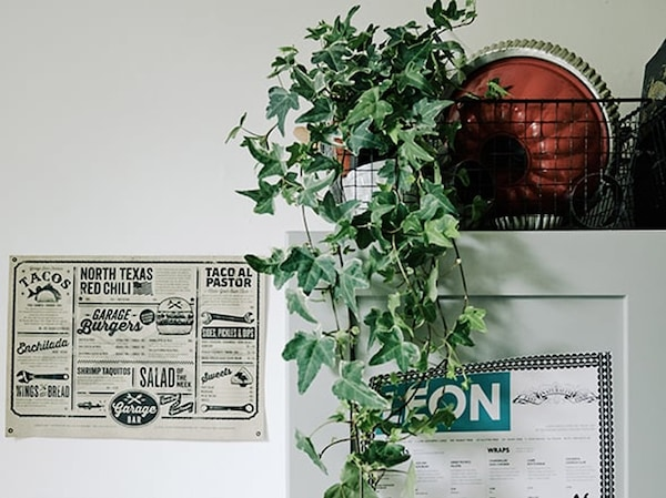 Tips for a rental house - HEDERA HELIX plant pot - IKEA wooninspiratie