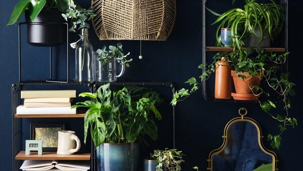 Tipy na vyzdobenie domácnosti pomocou okrasných rastlín.