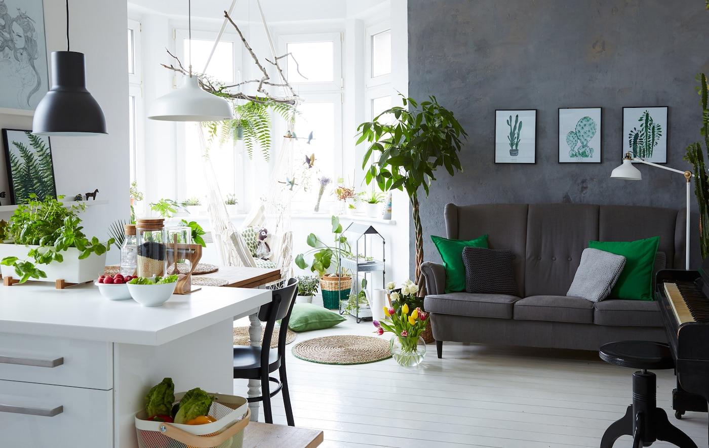 تملأ مارجو بيتها الأبيض الذي يتمتع بتصميم مفتوح بالنباتات الداخلية من أجل تقسيم المساحة.