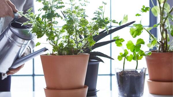 Történetek, amelyek bemutatják, hogyan lehet még több zöld növény az életed része.