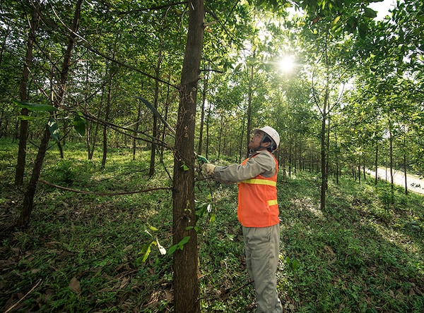Together with WWF and FSC, IKEA works to protect ecosystems - and people's livelihoods.