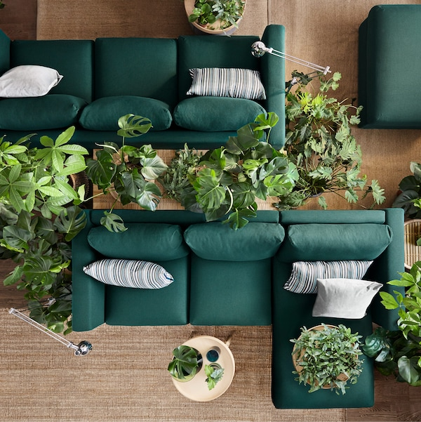 Top view of two green sofas back to back with various plants surrounding them.