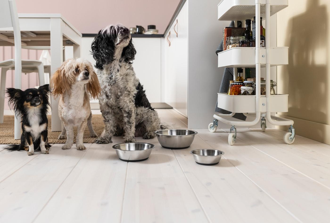 Tre hundar väntar förväntansfullt på mat.