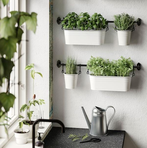 Tri crne IKEA FINTORP šipke postavljene na zid služe za odlaganje mikrozelenila u teglama pokraj kuhinjskog prozora i sudopera.