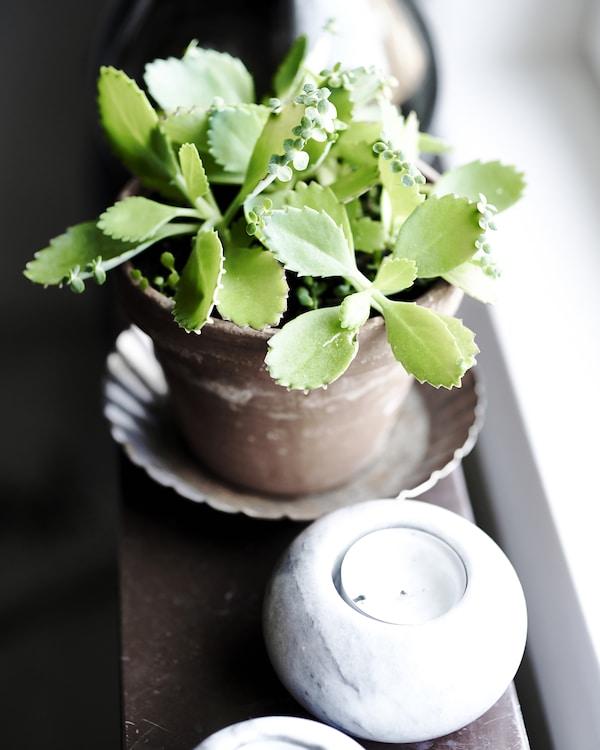 تساعد الشموع والنباتات في تحفيز التفكير الإبداعي.
