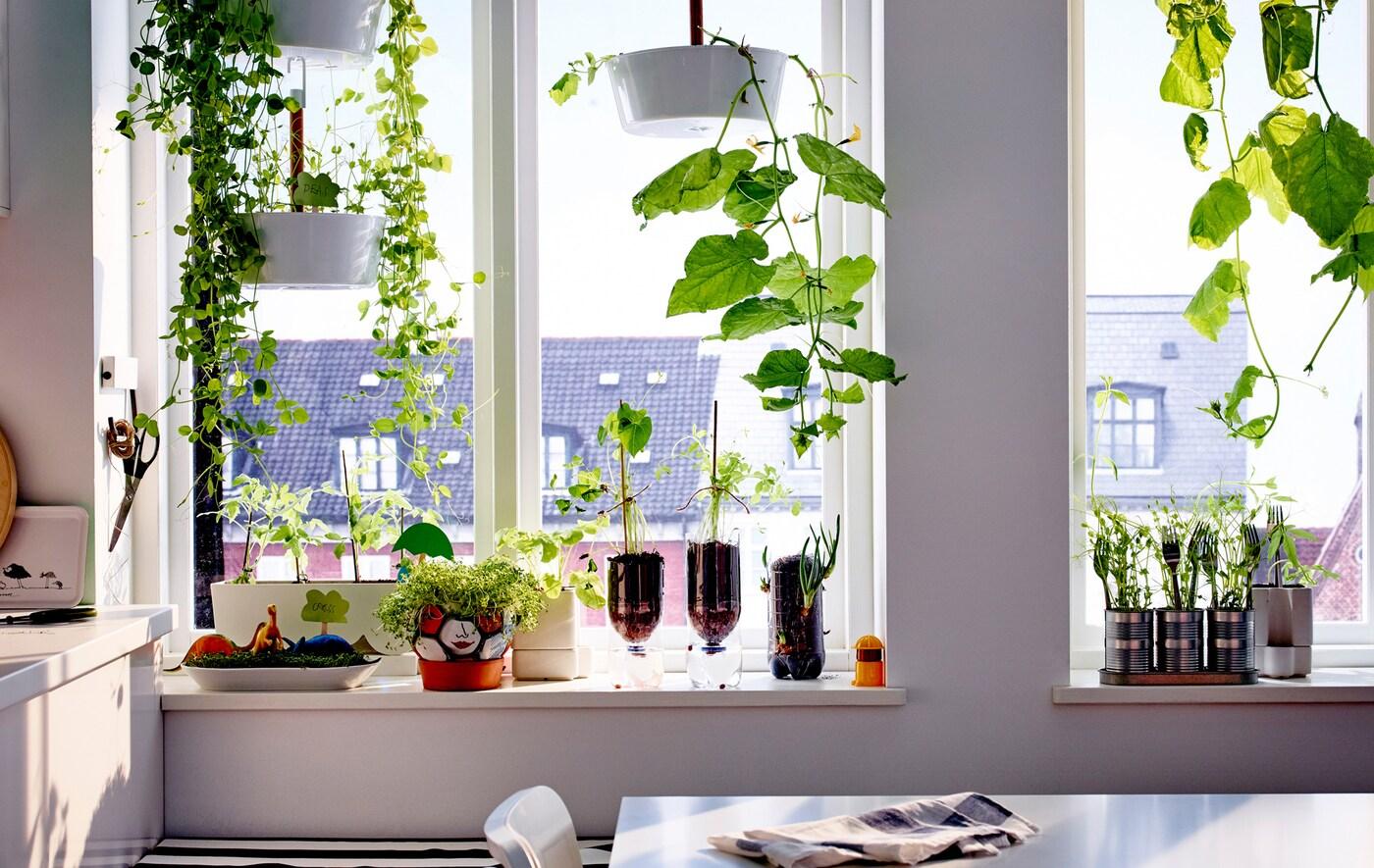 Tutustu kuuteen helppoon sisäviljelyprojektiin, joissa hyödynnetään vanhoja esineitä ja jotka voidaan toteuttaa ikkunalaudalla.