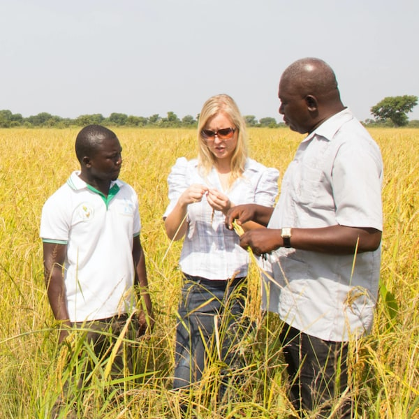 Two African farmers standing in a field, talking to the woman who created a weather forecast app about crop quality.
